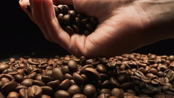 Holding Coffee Beans. Close-up.