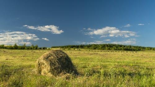 Hay Harvesting Stack Hay