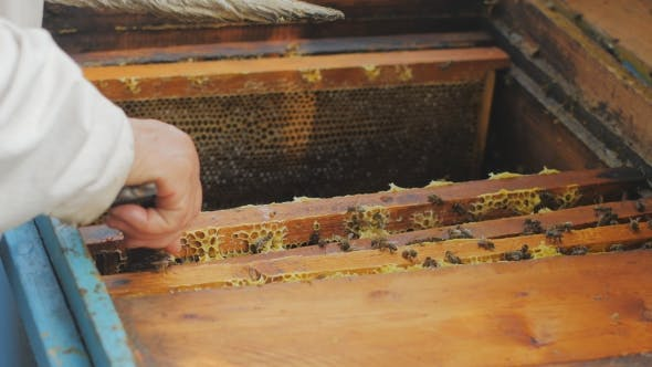 Thumbnail for Bees On Honeycomb
