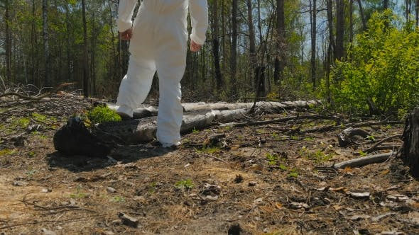 Thumbnail for The Man Walking Through The Sawn Trees In The Wood