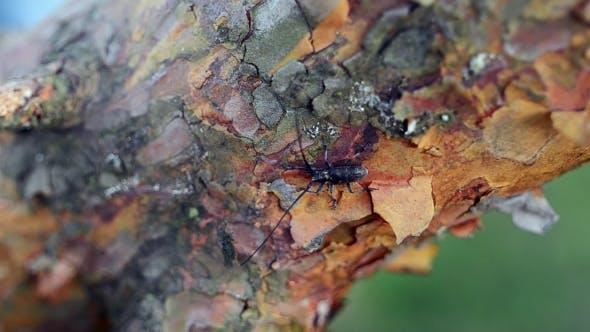Black Bug Moving On Branch