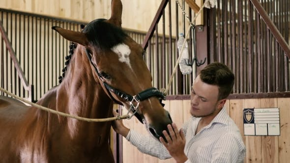Thumbnail for Young Man Petting a Horse On The Muzzle
