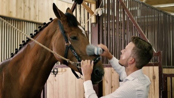 Thumbnail for Young Boy Cleans a Horse In a Stall