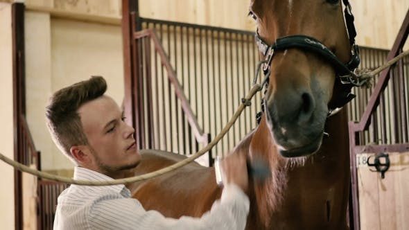The Man Cleans a Horse Body