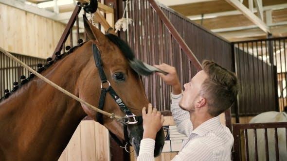 Thumbnail for Young Man Combing a Fetlock a Mane Horse