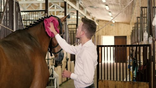 Man Clean The Horse's Withers
