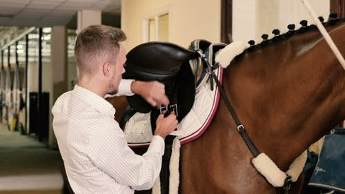Man Binds a Saddle To The Horse