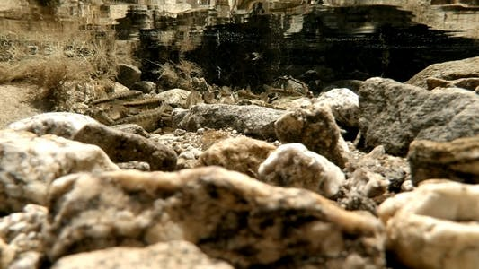 Thumbnail for Small Fishes in a River Pool 1
