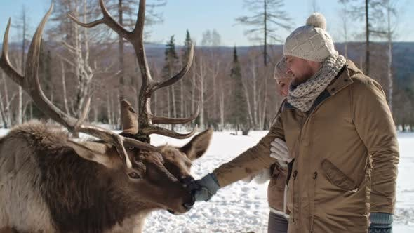 Thumbnail for Hand Feeding a Wild Deer