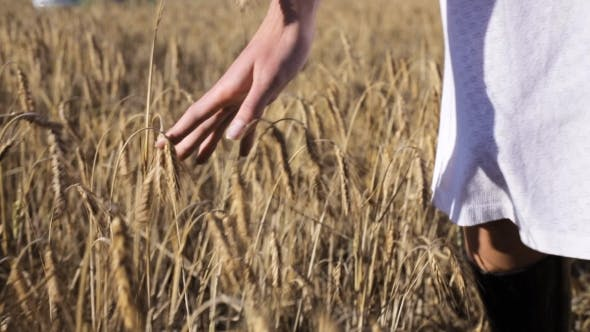Thumbnail for Woman In White Dress Walking Along Cereal Field 29