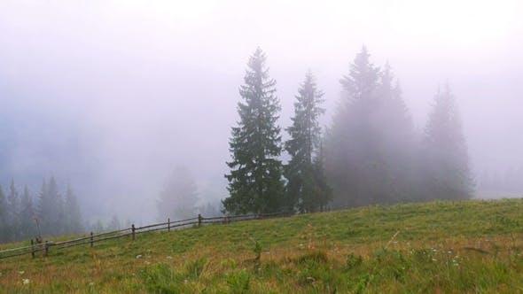 Thumbnail for Mountain Forest Fog