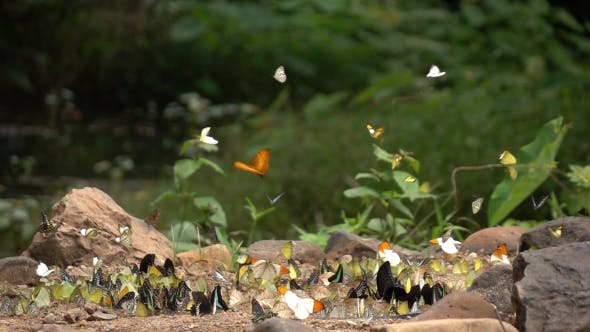 Thumbnail for Butterfly Flying