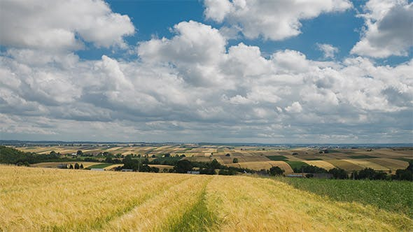 Cover Image for Agriculture Field and Blue Cloudy Sky
