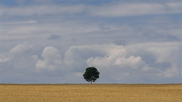 Thumbnail for Lonely Tree in The Field