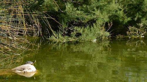 Turtle on Rock Lake
