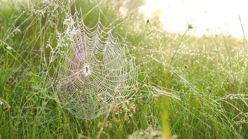 Spinne auf einem Netz.