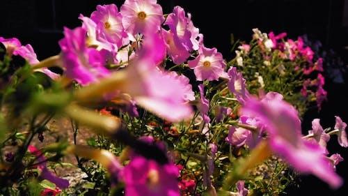 Beautiful Flowers In The Flowerbed.