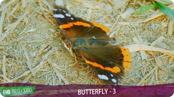 Thumbnail for Butterfly - 3