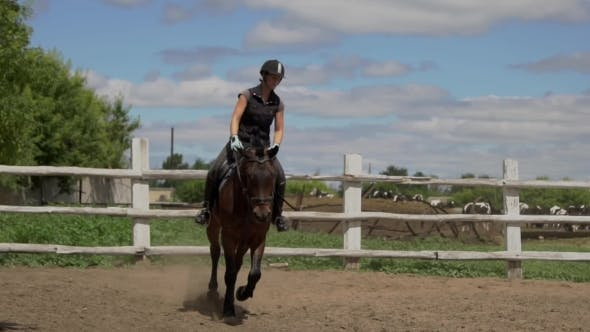 Thumbnail for Riding Horse. Girl On Beautiful Horse Riding On Manege.