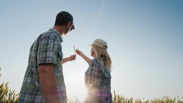 Thumbnail for Two Young Farmers a Man and a Woman Are Looking at a Spikelet of Wheat in the Sun