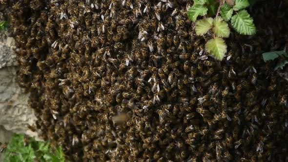 Thousands of Bees