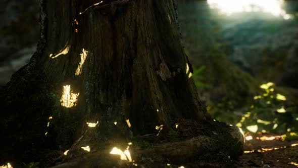 Thumbnail for Sunlight Rays Pour Through Leaves in a Rainforest