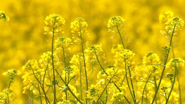 Thumbnail for Yellow Plant Leaves In Windy Day