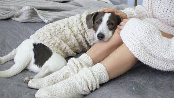 Thumbnail for Woman Legs In Knit Socks And Dog In Cozy Sweater Lying On Bed