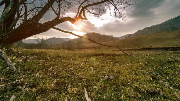 Thumbnail for Time Lapse of Death Tree and Dry Yellow Grass at Mountian Landscape with Clouds and Sun Rays