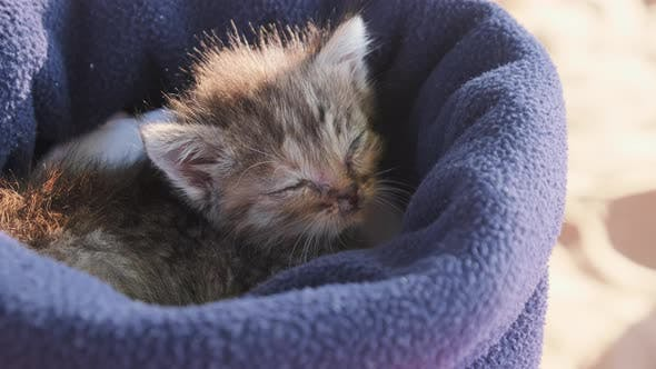 Thumbnail for Cute Three Week Old Kitten Sleeps in a Hat Outside