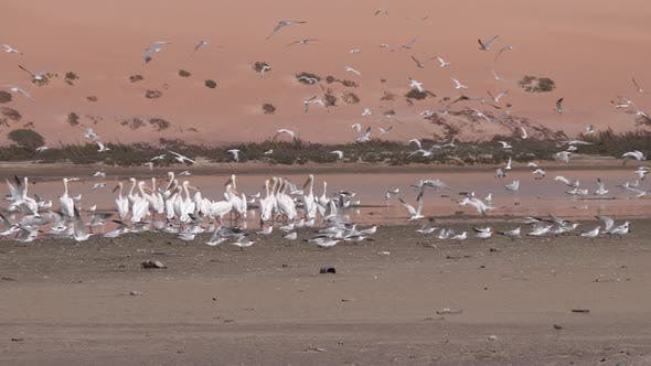 Thumbnail for Group of terns birds and pelican on the beach