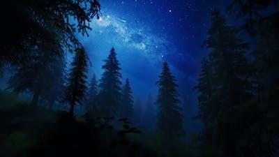 night sky falling stars in a forest 4K