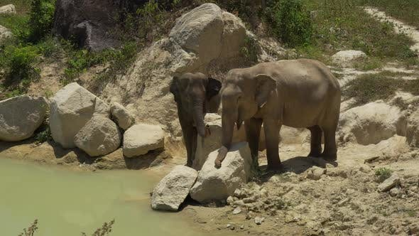 Thumbnail for Two Elephants On The Banks Of A River