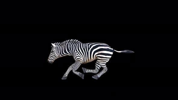 Thumbnail for 4K Zebra Running