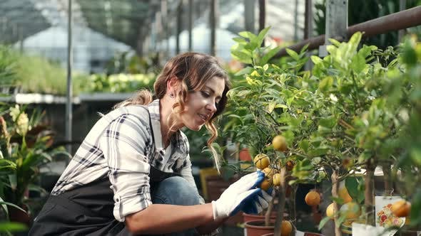 Thumbnail for Woman Checking Mandarins at a Plantation
