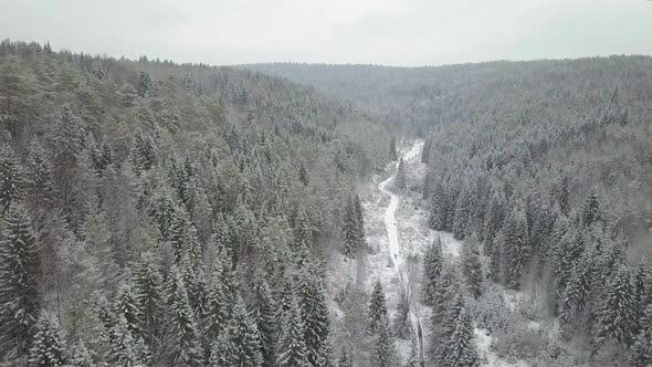 Cover Image for Aerial View of a Winter Woods Snowy Tree Branch in a View of the Winter Forest