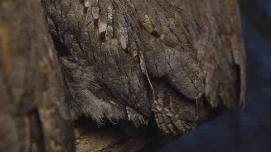 Thumbnail for Close Up of the Owls Feathers, Adorable Baby Owls on a Branch,
