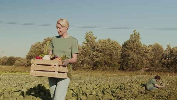 Thumbnail for Female Farmer Collecting Vegetables into Box