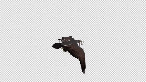 Snake Eagle with Serpent - Flying Loop - Back Angle
