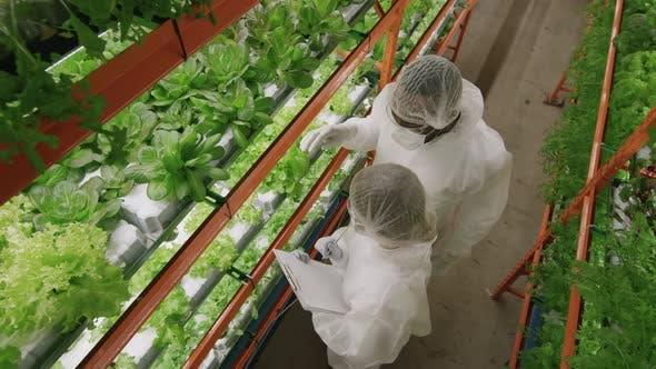 Agroingenieure forschen in der vertikalen Farm