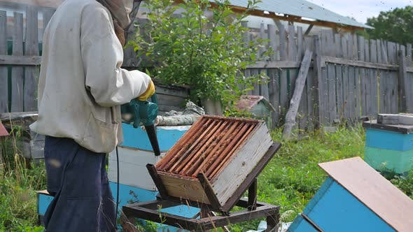 The Beekeeper Blows Out Bees From Hive with Blower To Remove Honeycomb.