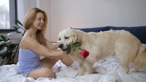 Thumbnail for Surprised Woman Receiving Red Rose From Pet Dog