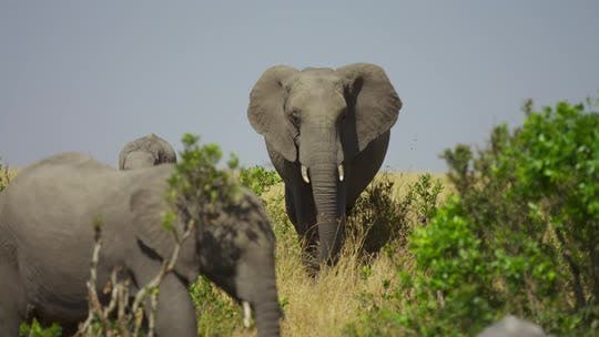 Elephants in the wilderness