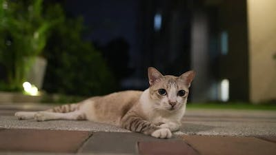 Cute Cat Outdoors at Night Looking Around