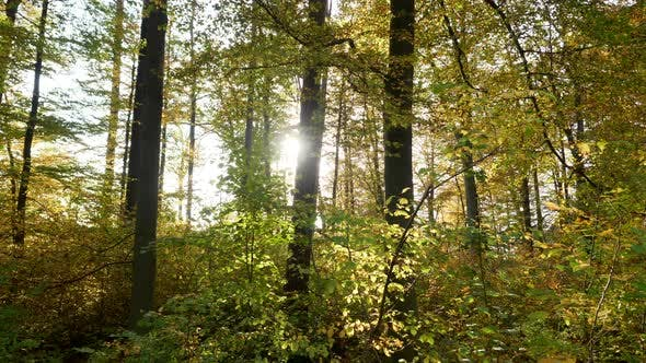 Thumbnail for Nature Environment of Forest Trees Landscape