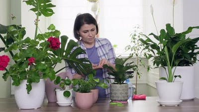 Indoor Houseplants in Pots Cultivation and Care