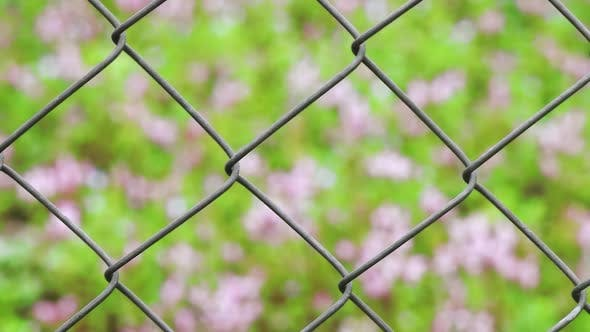 Thumbnail for Wire Fence