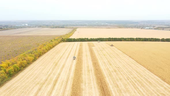 Aerial Shot of Farmland During Harvesting Process. View From High To Agricultural Machinery