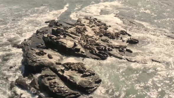 Aerial view of seal colony.