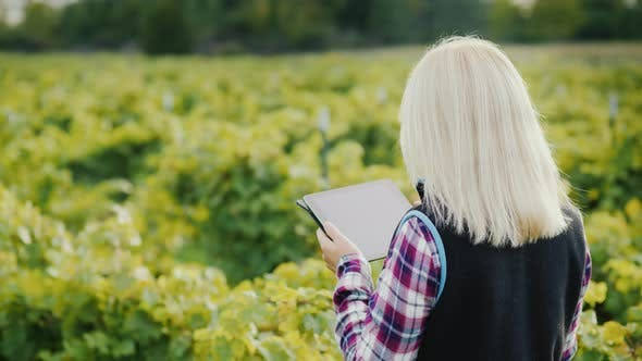 Thumbnail for Back View of Female Farmer Uses a Tablet Near His Garden. Evening Before Sunset